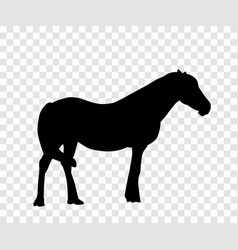 sticker to car silhouette horse vector image