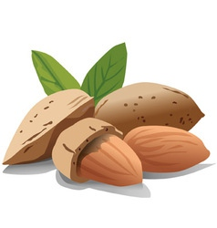 almonds vector image