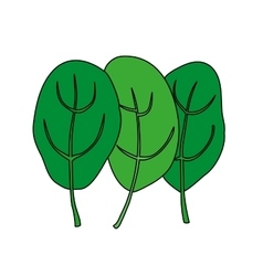 Cartoon of green fresh spinach vector image