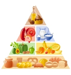 Food guide pyramid vector