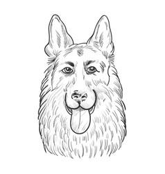 German shepherd dog face isolated on white vector