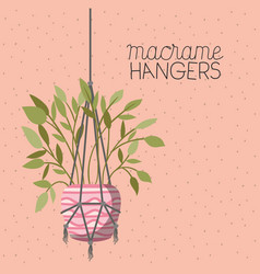 Houseplant in macrame hangers vector