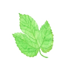 Watercolor hops leaf aquarelle vector