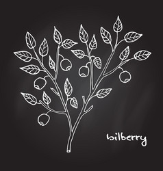 bilberry ripe berry vector image