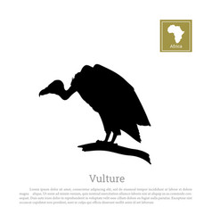 black silhouette of a vulture on white background vector image