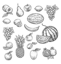 sketch fruits isolated icons vector image