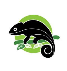 Chameleon logodesign vector