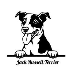 Jack russell terrier peeking dog - head isolated vector