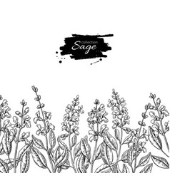 sage drawing border isolated plant with vector image