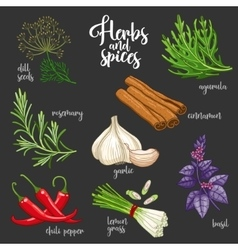 Spices and herbs set Colored on dark vector