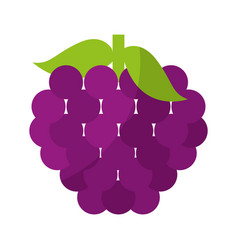 Grapes fresh fruit isolated icon vector