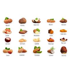 nut icon set cartoon style vector image