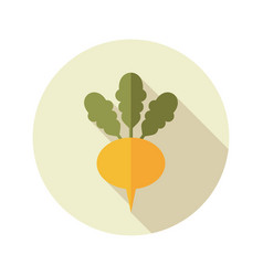 turnip flat icon vegetable root vector image