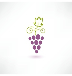 Wine Grape vector image