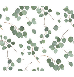 Eucalyptus silver dollar tree foliage natural vector