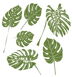 Silhouette tropical monstera leaves green vector