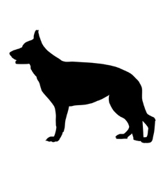 Black silhouette of German Shepherd dog vector image