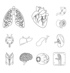 isolated object of body and human logo set of vector image