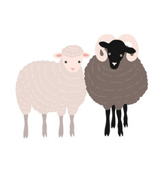 Pair of sheep and ram standing together adorable vector