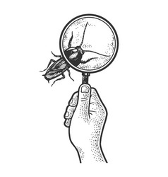 cockroach magnifying glass sketch vector image