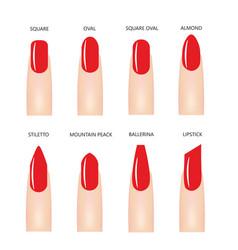 nail shapes with red nail polish vector image