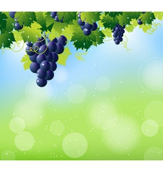 vine summer top vector image