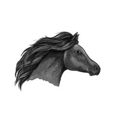Black graceful horse portrait vector image vector image