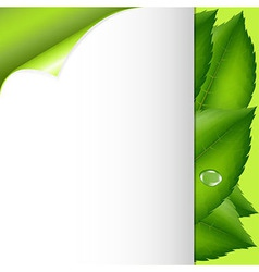 Green Leaves And Paper vector image vector image