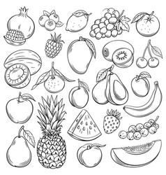 Sketch fruits vector