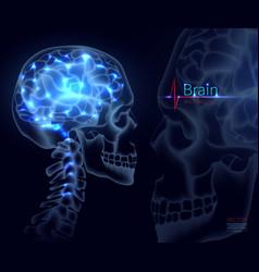 brain for medicine a skull vector image