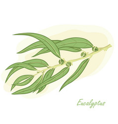 eucalyptus branch hand drawn vector image