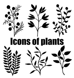 Icons of plants Herbarium Grass Plants vector