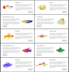 Marine fishes collection color vector