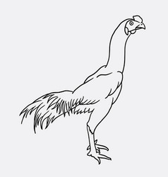 Rooster sketch vector
