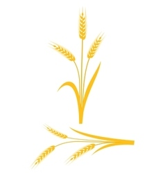 Yellow wheat ears on a white background vector image