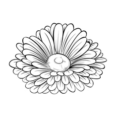 Black and white daisy flower isolated vector