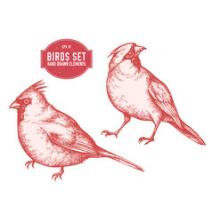 collection of hand drawn pastel cardinal vector image