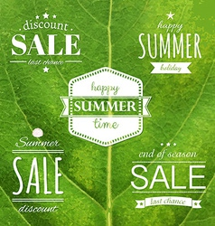 Green Leaf Texture With Summer Label vector