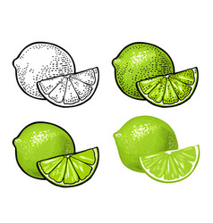 lime slice and whole color vintage vector image