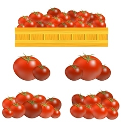 Set of Fresh Red Tomatoes vector image