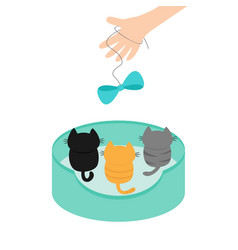 three kittens looking up to human hand and bow on vector image