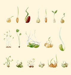 Watercolor beans peas seeds sprouts set vector