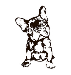 dog breed french bulldog vector image