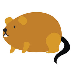 fat mouse on white background vector image