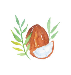 hand drawn watercolor painting coconut vector image