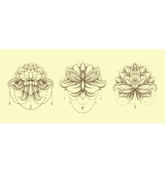 ornamental Lotus set vector image