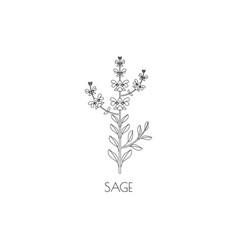 sage line icon vector image