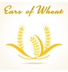 Wheat ears or rice icon vector