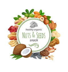 banner template with nuts and seeds vector image