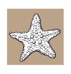 hand drawn starfish underwater living organism vector image